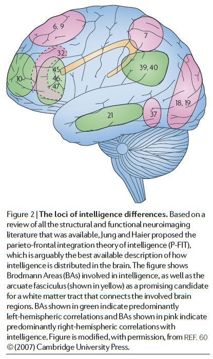 The neuroscience of human intelligence differences - Figure 2