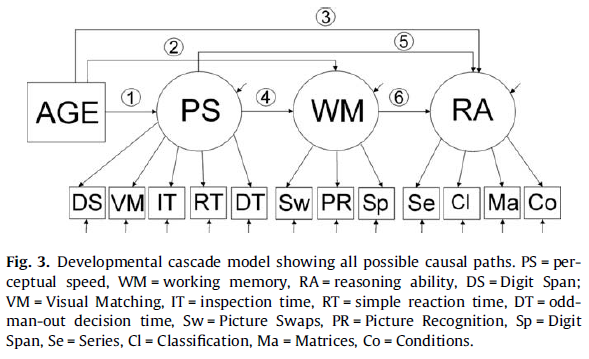 Processing speed, working memory and reasoning ability from childhood to old age - Figure 3